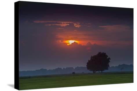 Sunset Above Field with Tree, Dykhausen, Sande, Frisia, Lower Saxony, Germany-Axel Ellerhorst-Stretched Canvas Print