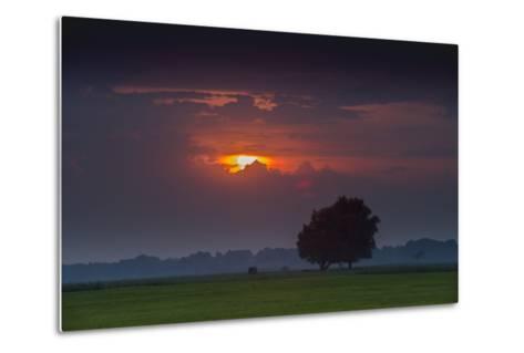Sunset Above Field with Tree, Dykhausen, Sande, Frisia, Lower Saxony, Germany-Axel Ellerhorst-Metal Print