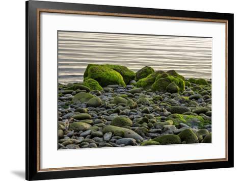 Iceland, Gardskagi, Coast, Moss-Covered Stones-Catharina Lux-Framed Art Print