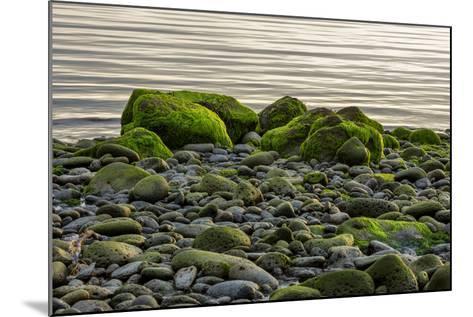 Iceland, Gardskagi, Coast, Moss-Covered Stones-Catharina Lux-Mounted Photographic Print