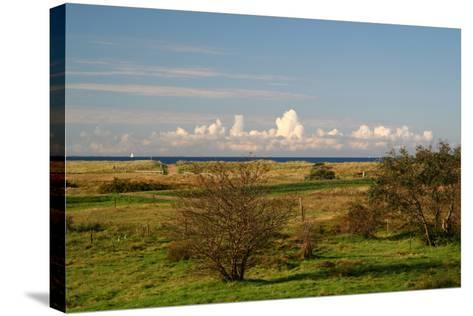 The Baltic Sea, Hiddensee, Heath, Landscape-Catharina Lux-Stretched Canvas Print