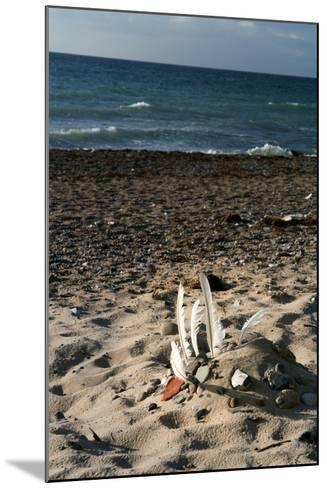 The Baltic Sea, RŸgen, North Beach-Catharina Lux-Mounted Photographic Print