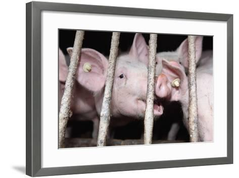 Farm, Pigsty-Catharina Lux-Framed Art Print