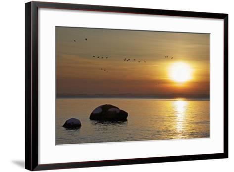 Wild Geese before Sundown over Bay of Wismar, View from the Island Poel-Uwe Steffens-Framed Art Print