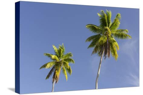 Coconut Trees, Plantation L'Union Estate, La Digue Island, the Seychelles-Rainer Mirau-Stretched Canvas Print