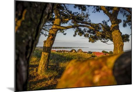 The Netherlands, Frisia, Terschelling, Dunes, Pine, Pinewood-Ingo Boelter-Mounted Photographic Print