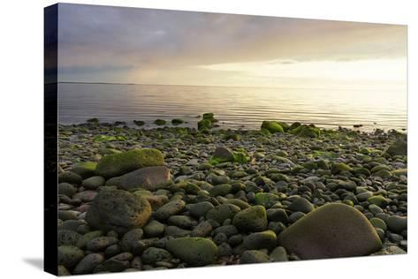 Iceland, Gardskagi, Coast, Stones-Catharina Lux-Stretched Canvas Print
