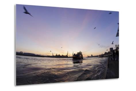 Gulls in the Backlight, Harbour Cranes, St Pauli Landing Stages-Axel Schmies-Metal Print