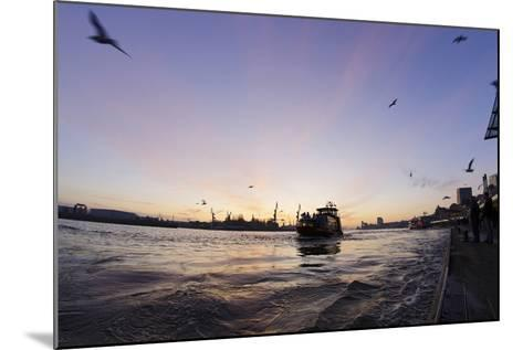 Gulls in the Backlight, Harbour Cranes, St Pauli Landing Stages-Axel Schmies-Mounted Photographic Print