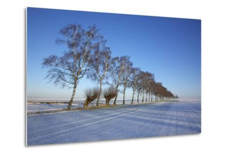 Birches at a Country Lane and Snow-Covered Fields on the Baltic Sea Island Poel Near Wismar-Uwe Steffens-Metal Print
