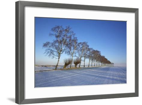 Birches at a Country Lane and Snow-Covered Fields on the Baltic Sea Island Poel Near Wismar-Uwe Steffens-Framed Art Print