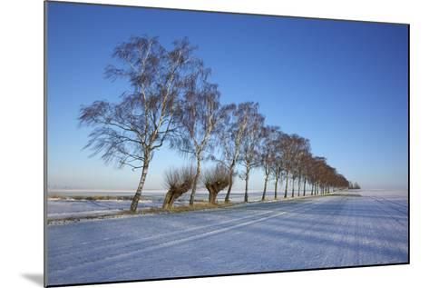 Birches at a Country Lane and Snow-Covered Fields on the Baltic Sea Island Poel Near Wismar-Uwe Steffens-Mounted Photographic Print