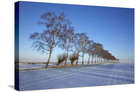 Birches at a Country Lane and Snow-Covered Fields on the Baltic Sea Island Poel Near Wismar-Uwe Steffens-Stretched Canvas Print