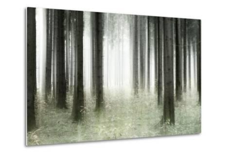 Misty Spruce Forest in Autumn, Abstract Study [M], Colour and Contrast Digitally Enhanced-Andreas Vitting-Metal Print