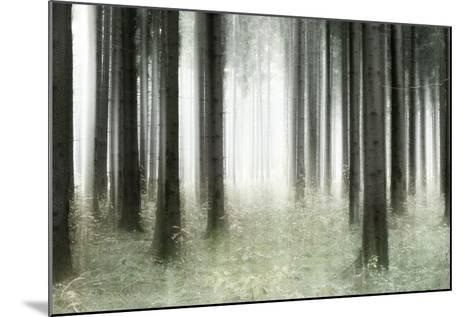 Misty Spruce Forest in Autumn, Abstract Study [M], Colour and Contrast Digitally Enhanced-Andreas Vitting-Mounted Photographic Print