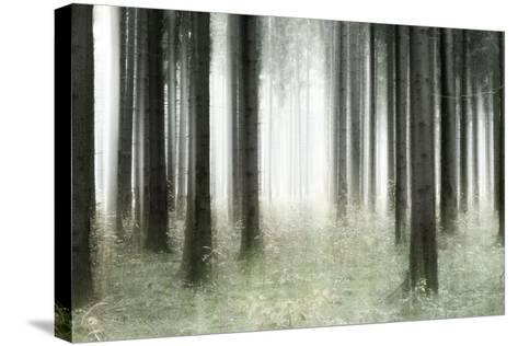 Misty Spruce Forest in Autumn, Abstract Study [M], Colour and Contrast Digitally Enhanced-Andreas Vitting-Stretched Canvas Print