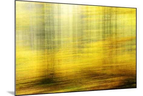 Deciduous Forest in Full Autumn Colours, Abstract Study [M-Andreas Vitting-Mounted Photographic Print