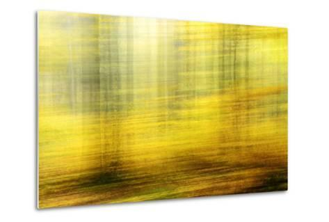 Deciduous Forest in Full Autumn Colours, Abstract Study [M-Andreas Vitting-Metal Print