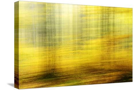Deciduous Forest in Full Autumn Colours, Abstract Study [M-Andreas Vitting-Stretched Canvas Print