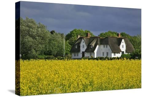 Friesenhof' Behind a Rape Field at 'Bob Terp' (Street) in Archsum (Village) on the Island of Sylt-Uwe Steffens-Stretched Canvas Print