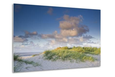 Sand Dune with Beach Grass in the Wattenmeer in the Evening Light, Schillig, North Sea-Axel Ellerhorst-Metal Print