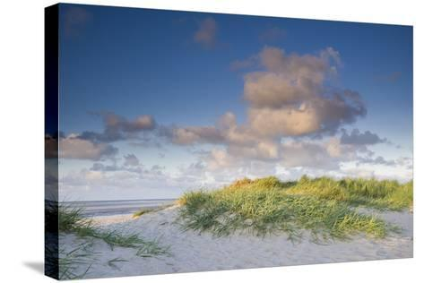 Sand Dune with Beach Grass in the Wattenmeer in the Evening Light, Schillig, North Sea-Axel Ellerhorst-Stretched Canvas Print