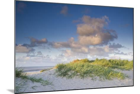 Sand Dune with Beach Grass in the Wattenmeer in the Evening Light, Schillig, North Sea-Axel Ellerhorst-Mounted Photographic Print