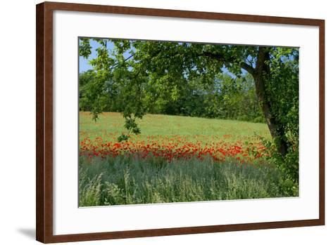 Germany, Weser Hills, Lower Saxony, Polle, Corn Poppy Field, Tree-Chris Seba-Framed Art Print