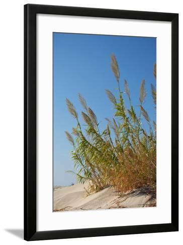 Greece, Crete, Elafonisi, Dune Grass, Nature Conservation-Catharina Lux-Framed Art Print