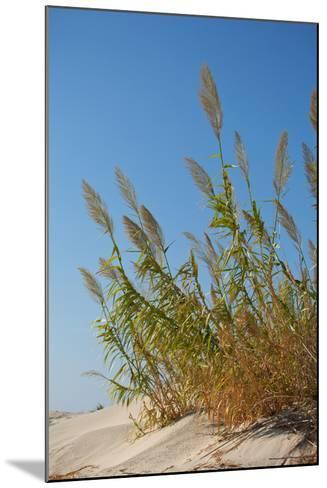 Greece, Crete, Elafonisi, Dune Grass, Nature Conservation-Catharina Lux-Mounted Photographic Print