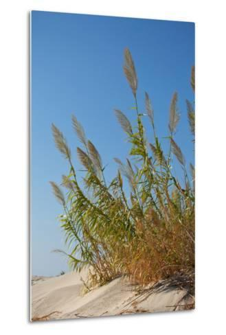 Greece, Crete, Elafonisi, Dune Grass, Nature Conservation-Catharina Lux-Metal Print