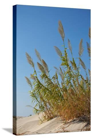 Greece, Crete, Elafonisi, Dune Grass, Nature Conservation-Catharina Lux-Stretched Canvas Print