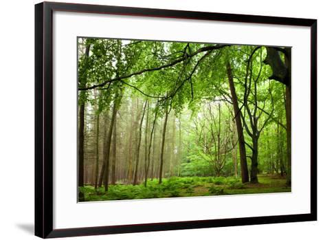 The Baltic Sea, R?gen, Mixed Forest-Catharina Lux-Framed Art Print
