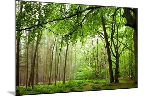 The Baltic Sea, R?gen, Mixed Forest-Catharina Lux-Mounted Photographic Print