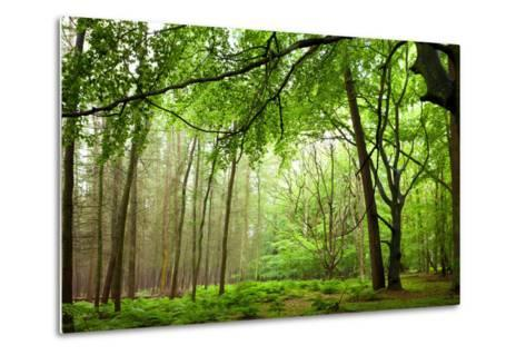 The Baltic Sea, R?gen, Mixed Forest-Catharina Lux-Metal Print