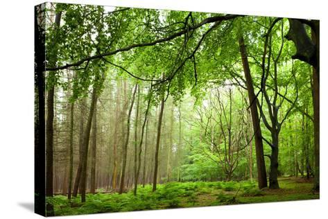 The Baltic Sea, R?gen, Mixed Forest-Catharina Lux-Stretched Canvas Print