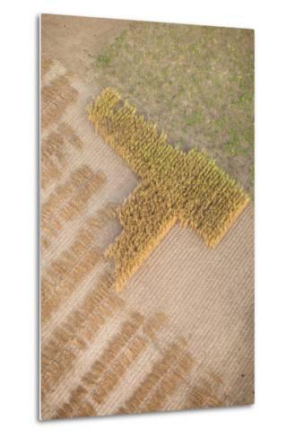 Aerial Shot of Field at Bagan, Myanmar-Harry Marx-Metal Print