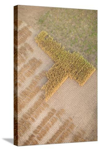 Aerial Shot of Field at Bagan, Myanmar-Harry Marx-Stretched Canvas Print