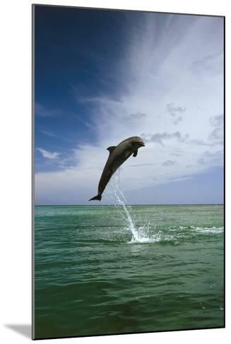 Sea, Ordinary Dolphin, Delphinus Delphis, Jump, Series-Frank Lukasseck-Mounted Photographic Print