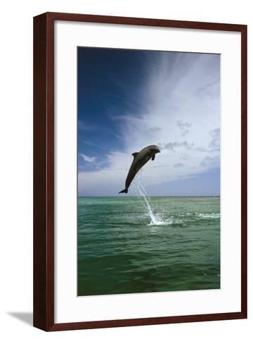 Sea, Ordinary Dolphin, Delphinus Delphis, Jump, Series-Frank Lukasseck-Framed Art Print