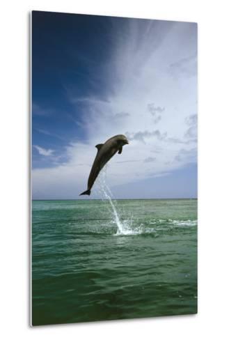 Sea, Ordinary Dolphin, Delphinus Delphis, Jump, Series-Frank Lukasseck-Metal Print