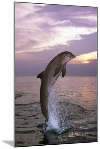 Sea, Ordinary Dolphin, Delphinus Delphis, Jump, Twilight, Series, Waters, Wildlife, Animal, Mammal-Frank Lukasseck-Mounted Photographic Print