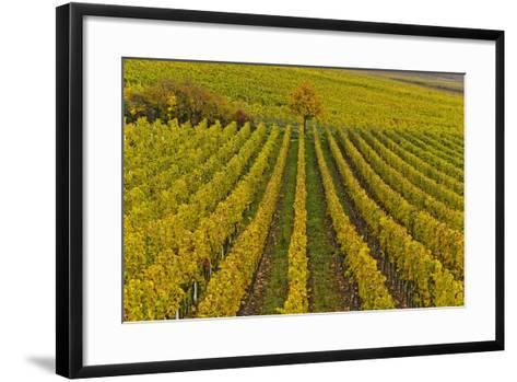 Germany, Rhineland-Palatinate, Palatinate, German Wine Road, Vineyards, Autumn, Tree, Colorful-Udo Siebig-Framed Art Print