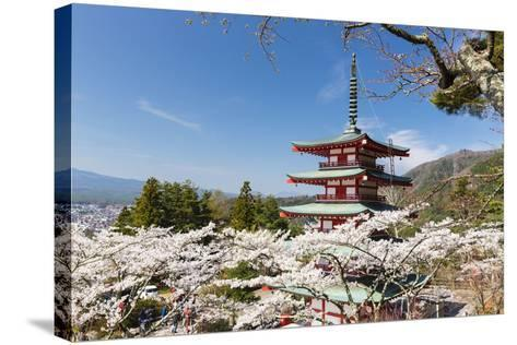 Chureito Pagoda Between Blossoming Cherry Trees, Arakura-Yama Sengen-Koen Park, Chubu Region-P. Kaczynski-Stretched Canvas Print