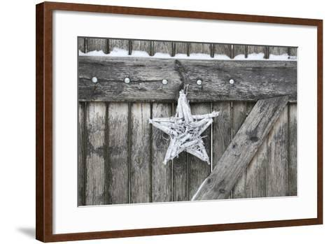 Poinsettia and Age Wooden Gate-Andrea Haase-Framed Art Print