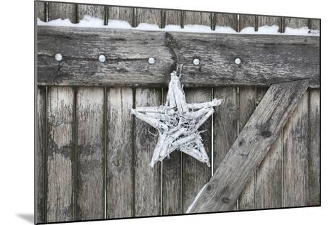 Poinsettia and Age Wooden Gate-Andrea Haase-Mounted Photographic Print