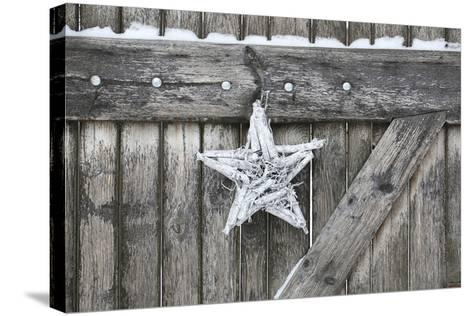 Poinsettia and Age Wooden Gate-Andrea Haase-Stretched Canvas Print