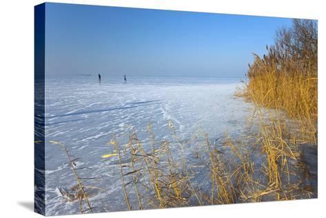 Europe, Germany, Steinhude, Steinhuder Meer, Ice Cover, Reed, Winter-Chris Seba-Stretched Canvas Print