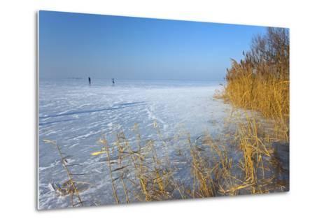 Europe, Germany, Steinhude, Steinhuder Meer, Ice Cover, Reed, Winter-Chris Seba-Metal Print