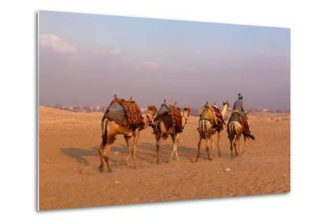 Egypt, Cairo, Pyramids of Gizeh, Cameleer-Catharina Lux-Metal Print
